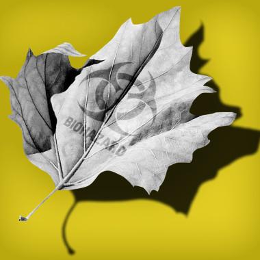 NrG Advertising - NRM Biohazard leaf home